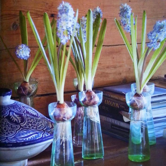 Blumendeko Hyazinthen