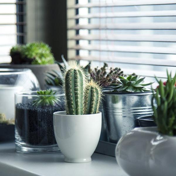 Succulenten - der Pflanzentrend 2018
