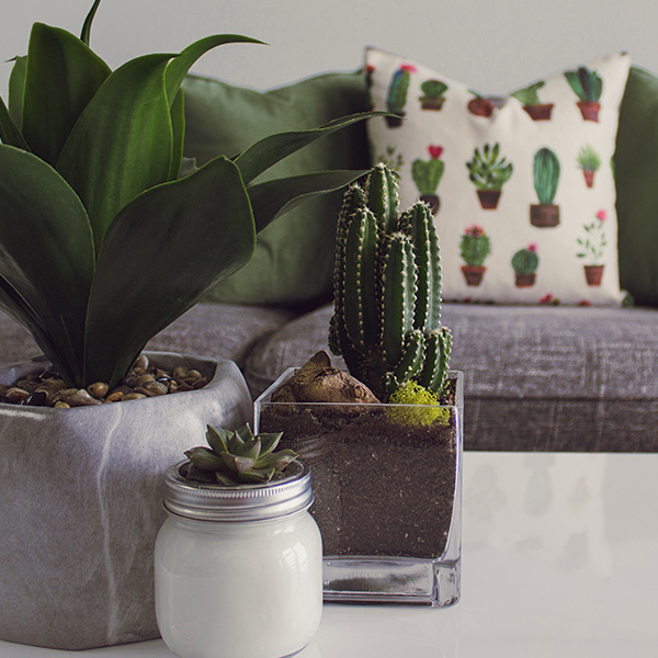 Topfpflanzen als lebendige Zimmerdeko